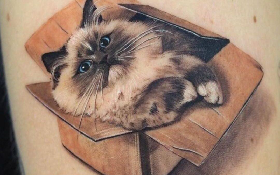 Minimalistic colour realism tattoo cat in a box