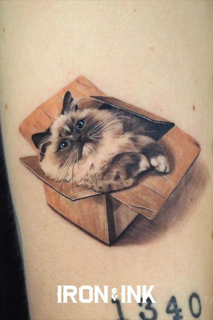 Minimalistic colour realism cat in a box